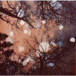 Dianne Bos, Flanders Trees 7A, 2017, 19x19